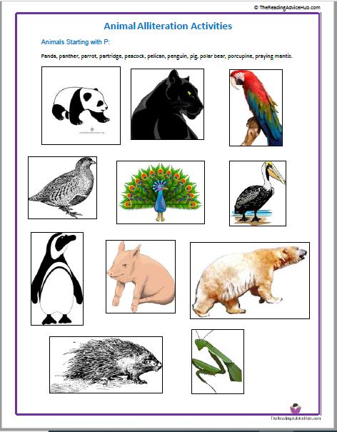 animal alliteration activities